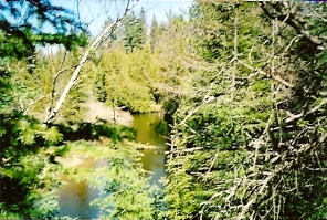 Northern Michigan Real Estate Property Ocqueoc River 357 feet frontage