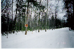Northern Michigan Real Estate Property Wooded Residential Lots